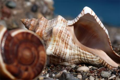 Композиции из морских камней и ракушек