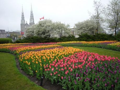 Фестиваль тюльпанов для молодоженов