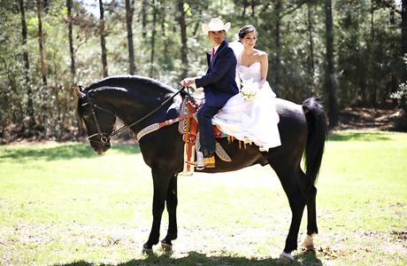 Конная прогулка на свадьбе