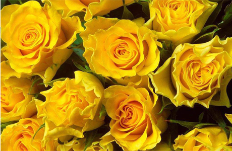 Желтые розы - разлука