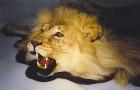 Жертвенный лев