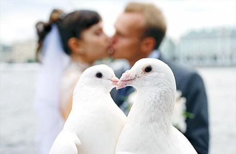 Голуби на свадьбе - за и против