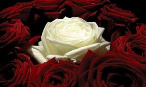 10 красных роз и одну белую, как символ преданности