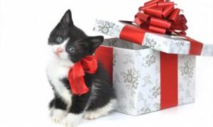 Домашние животные в подарок