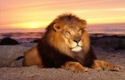 Совместимость по знаку Зодиака – если ты Лев