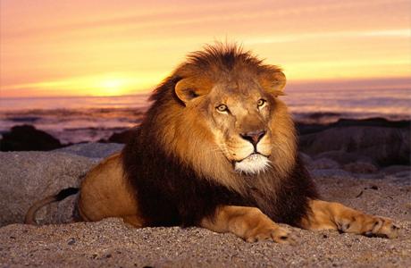 Совместимость по знаку Зодиака – Лев
