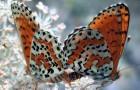 На свадьбе было много живых бабочек