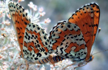 На свадьбе были живые бабочки