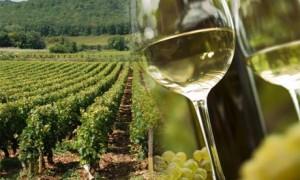 Виноградники Бургундии