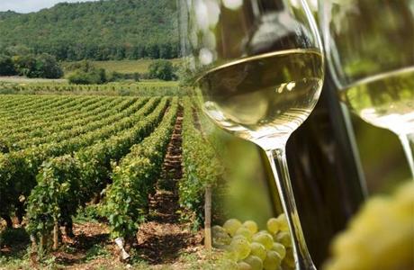 Свадебное путешествие к виногградникам