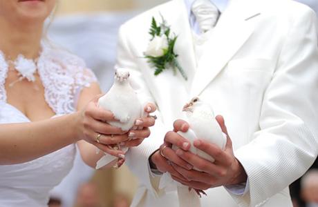 Заказать голубей легко