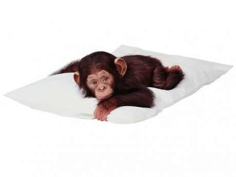 Год обезьяны гороскоп