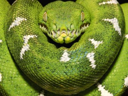 Год змеи гороскоп