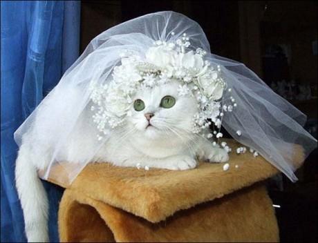 Кошка Сесилия вышла замуж