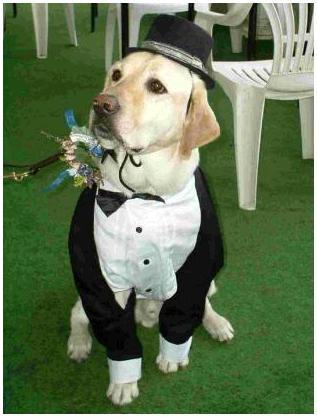 Пес как положено в свадебном наряде
