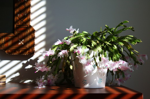 Цветы в вакууме как сделать