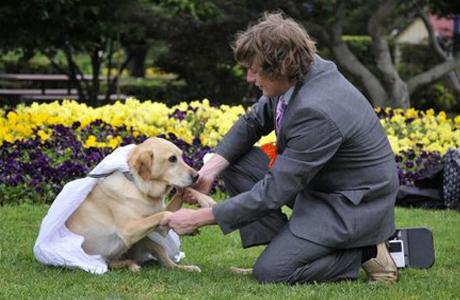 Австралиец Джозеф женился на собаке