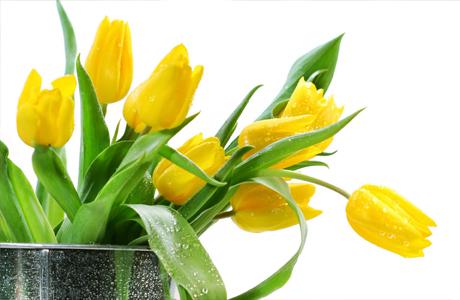 Цветы для свадьбы - желтые тюльпаны