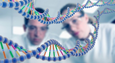 ДНК-совместимость жениха и невесты