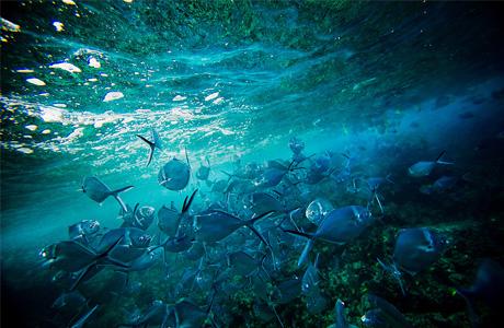 Галапагосские острова - лучшее место для дайверов