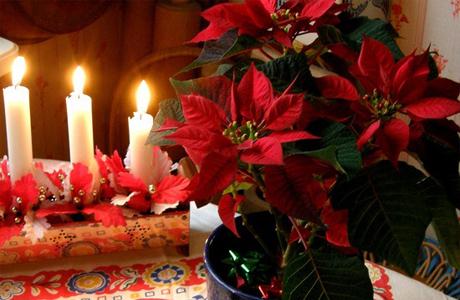 Цветы для Рождественской свадьбы
