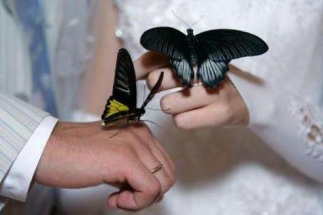 Бабочки в подарок для молодоженов