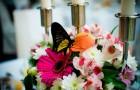 Живая бабочка - неординарный свадебный подарок