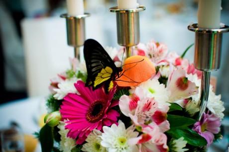 Что подарить молодоженам - живая бабочка