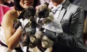 Китайский свадебный гороскоп 2012: Кролик (Кот)