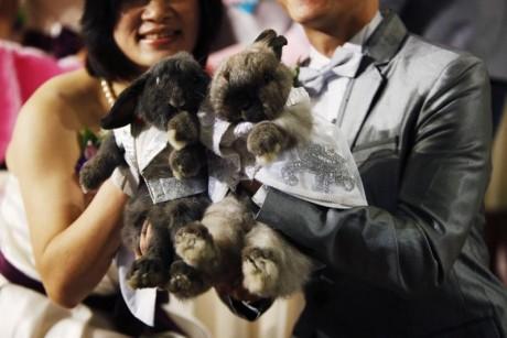 Китайский свадебный гороскоп 2012 для Кролика (Кота)