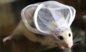 Китайский свадебный гороскоп 2012: Крыса