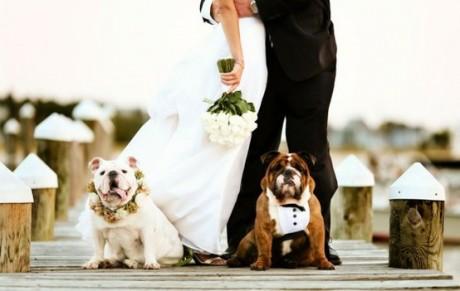 Китайский свадебный гороскоп 2012 для Собаки
