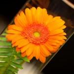 Оригинальная идея - цветы внутри бокала