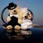 И снова медведи в свадебных нарядах