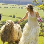 Свадебное платье Луизы Фейрберн из шерсти ее любимой овцы