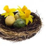 Свадебный тренд - гнездо