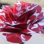 Цветы с разноцветными лепестками
