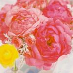 Розовые пионы украсят любой букет