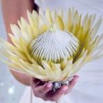 Свадебный букет невесты из цветка королевской протеры