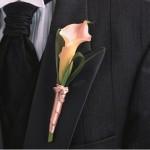 Маленькая розовая лилия на черном