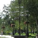 Знаменитая пальма Мерцалова